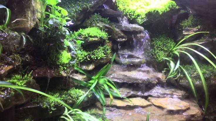 Paludarium Waterfall Update