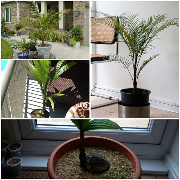 Grune Zimmer Pflanzen Schoner Indoor Garten