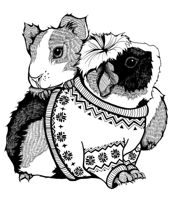 It's just a picture of Ambitious Coloring Pages Of Guinea Pigs Homes