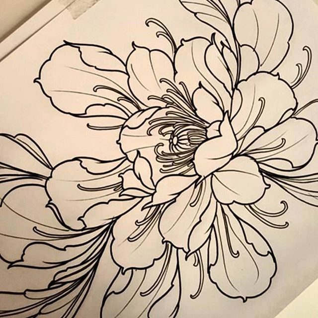 Japanese Flower Line Drawing : Best images about botanical tattoo reference on