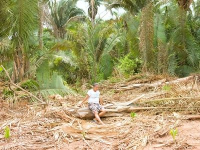 5 consumer products linked to illegal rainforest destruction.