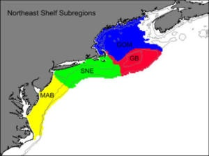 Sea surface temperatures reach highest level in 150 years on Northeast continental shelf