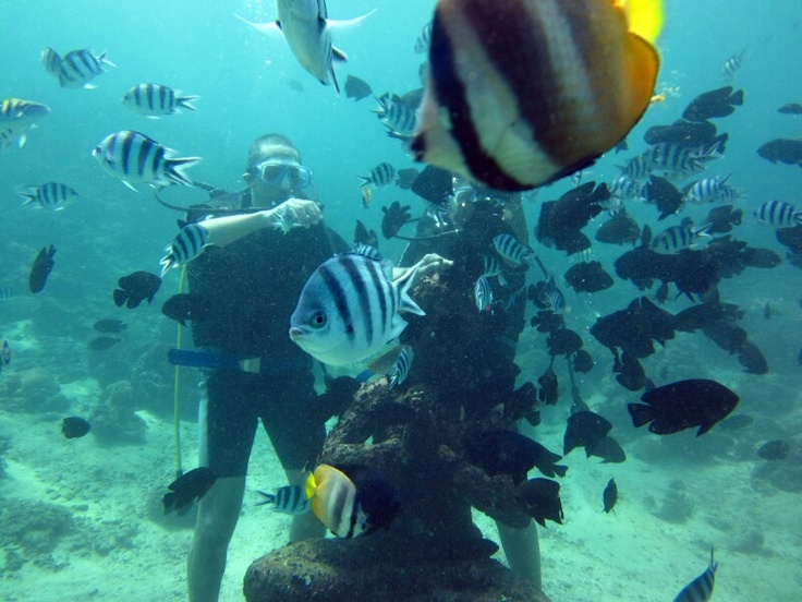 Surrounded by fish in the depth blue sea, Bali - Indonesia