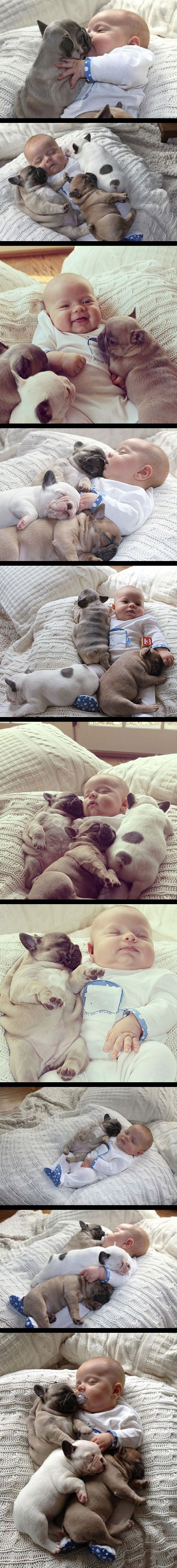cute babies and french bulldog puppies.