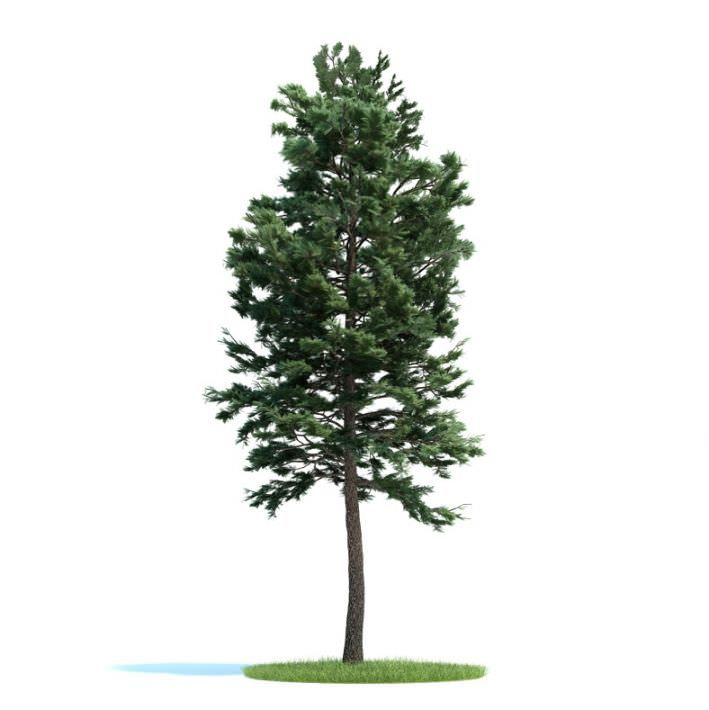 Tall Green Tree Pine 3d Model Green Trees Trees To Plant Plants