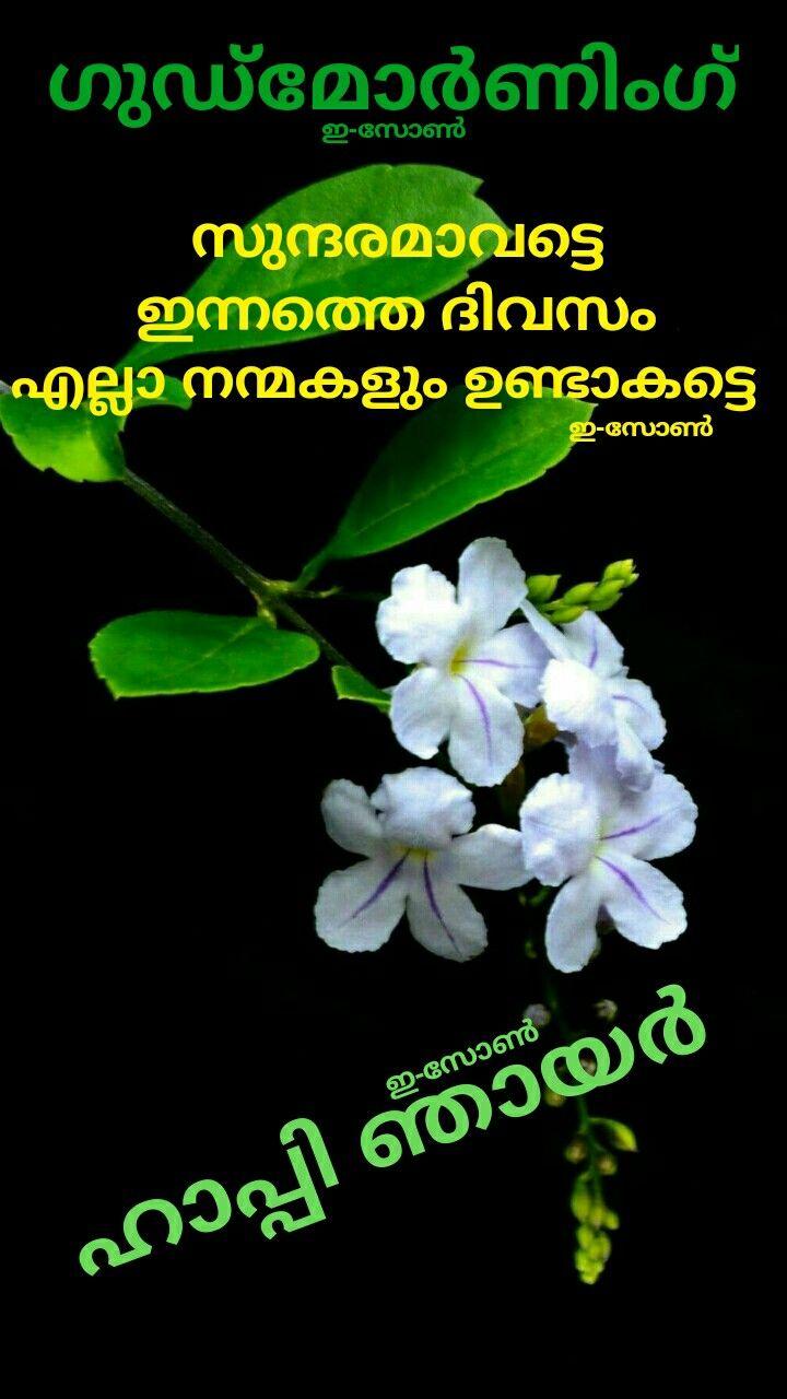 Pin By Eron On E Zone Sunday Wishes Good Morning Wishes Morning Wish