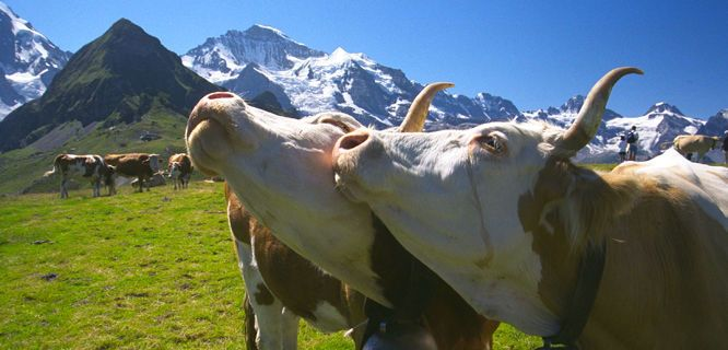 This week on the Travel with Rick Steves Radio Show, our Swiss tour guide Martin Minich tells you how Switzerland pulls neighboring European cultures together into a uniquely Swiss identity,
