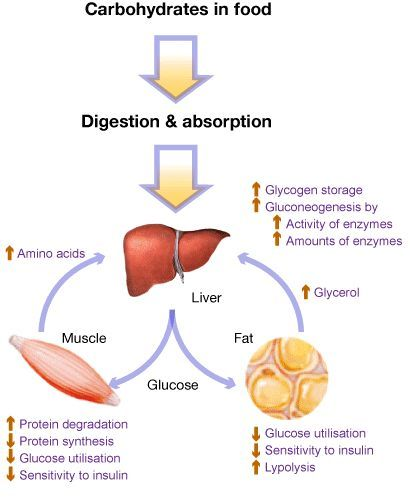 digestion and nutrients When the chyme enters the large intestine all the nutrients that could have been absorbed are now gone but some type of digestion still take place in the large intestine via the presence of .