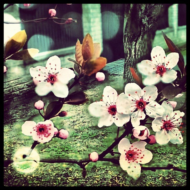 #virágok #flowers #tavasz #spring