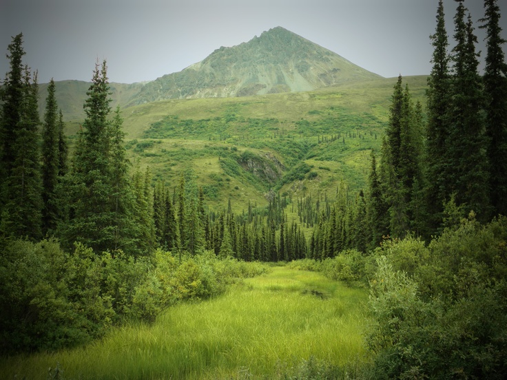 Tranquility on the Denali Highway