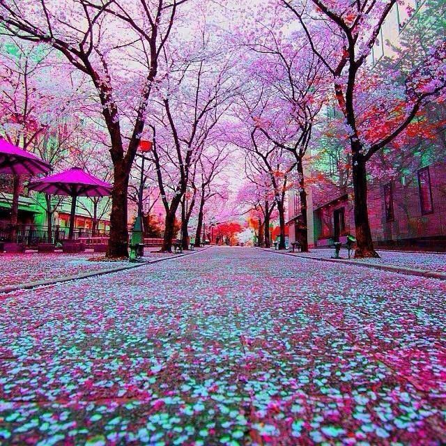 çiçekli manzara resimleri: Yandex.Görsel'de 26 bin görsel bulundu