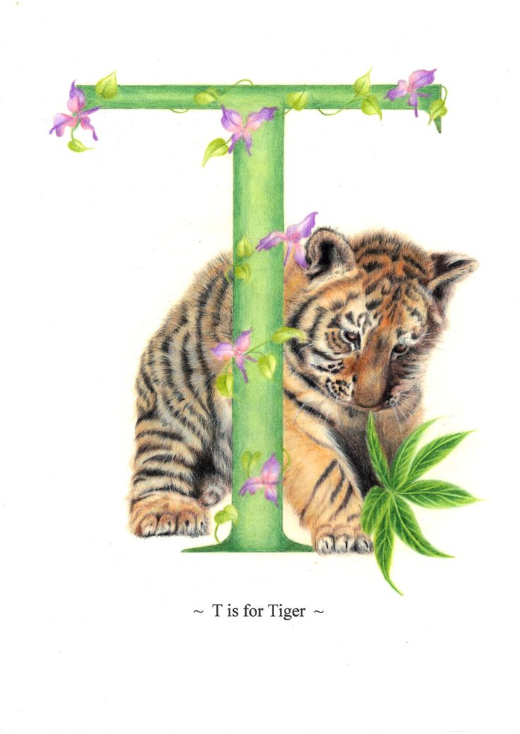 Tiger Nursery Art Print, Tiger Cub Letter Art Print, UK Seller by nickyspetportraits on Etsy