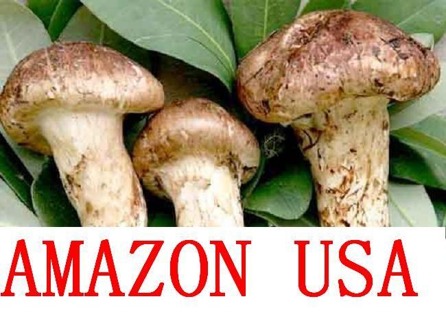 Buy Mushroom Truffle and Pu Erh Tea for sale online