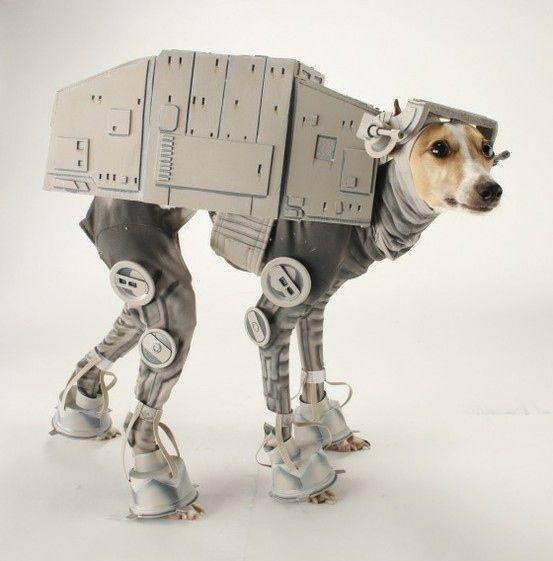 Star Wars costume #Animal Hospital #Veterinarian #Pets #KAH #Vet #FrederickMaryland #Costumes #Halloween