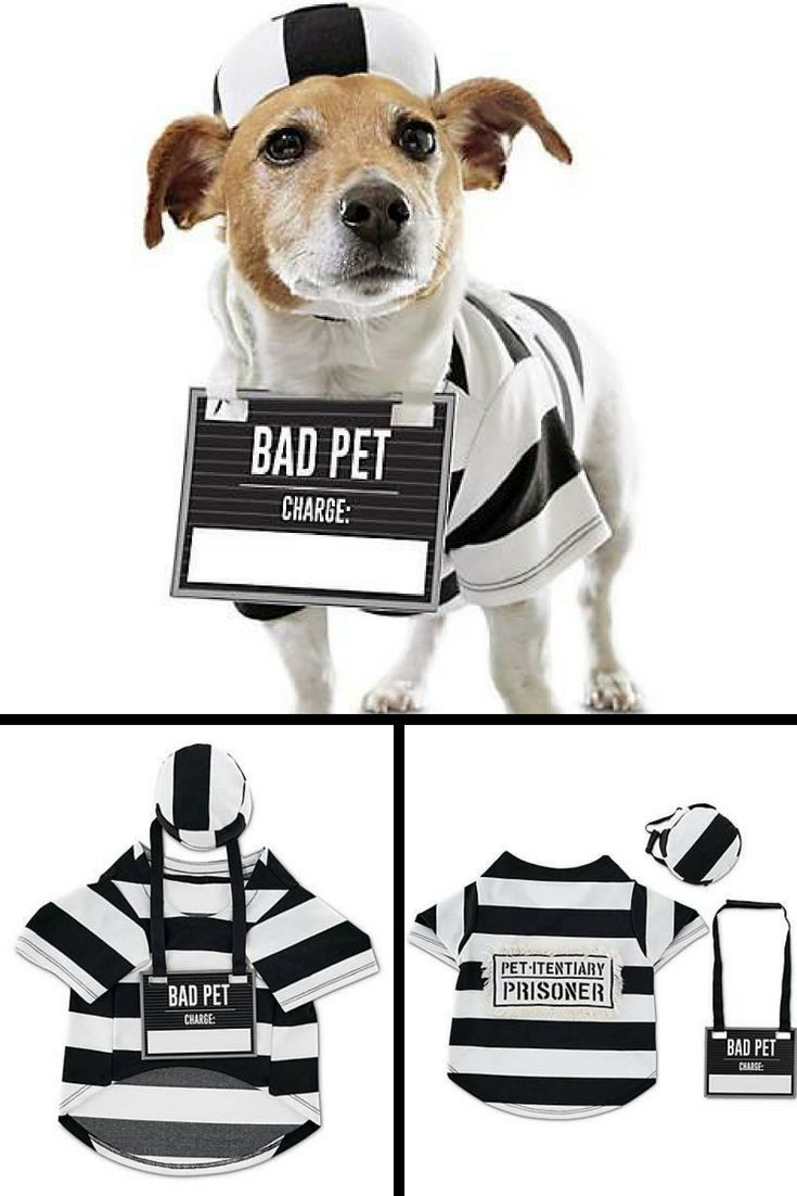 This Prisoner Pet Costume Locks Up A Solid Look For Your Cat Or Dog This Halloween Comple Dog Halloween Costumes Funny Pet Costumes Dog Halloween Costumes Diy