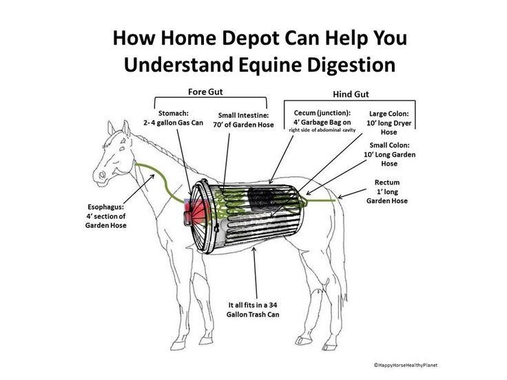 105 best equine feeding nutrition images on pinterest horse care how a trip to home depot can help you understand equine digestion ccuart Gallery