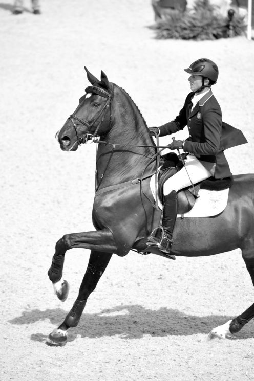 Ben Maher and his home-bred stallion, Tripple X