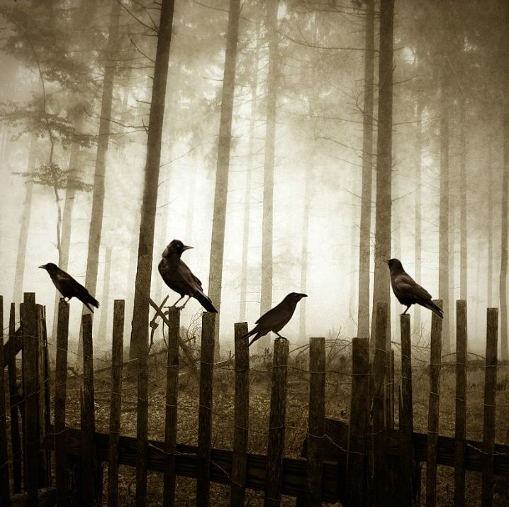 Edge of the woods: Fence, Dark Places, The Ravens, The Edge, Canvas Pictures, Animal Totems, Crows, Photography, Halloween