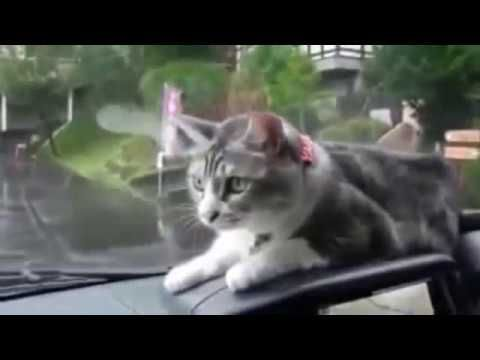 Funny Cat videos 2016: Funny Cat Fails, Funny Cat and Dog. Compilation 2016 #9 - http://positivelifemagazine.com/funny-cat-videos-2016-funny-cat-fails-funny-cat-and-dog-compilation-2016-9/ http://img.youtube.com/vi/vDsN5uXGEt8/0.jpg  Thank for watching my video please subcripe for more funny cat videos, funny cat fails, funny cat videos try not to laugh or grin, funny cats and dogs, funny cat … ***Get your free domain and free site builder*** Click to Surprise me! Ple