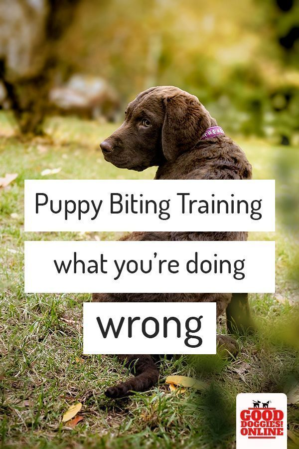 Puppy Biting Training You Are Doing It Wrong Puppy Biting