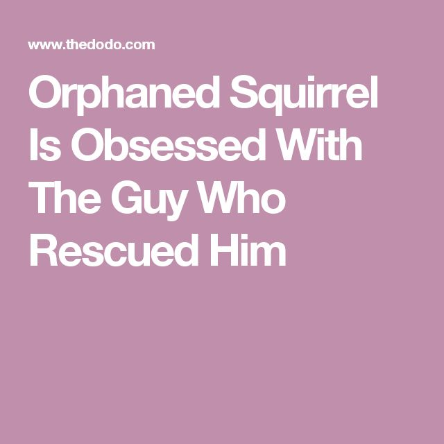 Orphaned Squirrel Is Obsessed With The Guy Who Rescued Him