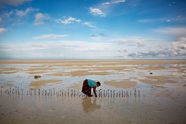 """NORTH TARAWA, KIRIBATI 3/20/2016 """"I don't want my land to be lost to the sea."""" Tabwena Kaokatekai planted mangrove trees in an effort to stop coastal erosion. Climate change and rising seas are threatening her island nation's existence. Josh Haner/The New York Times"""