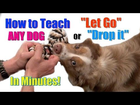 How to Train Your Puppy 8 Things in 7 Days! (STOP Puppy Biting, Come, Stay... ) - YouTube