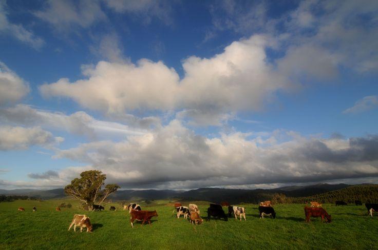 Lush farming area near Derby, North East Tasmania