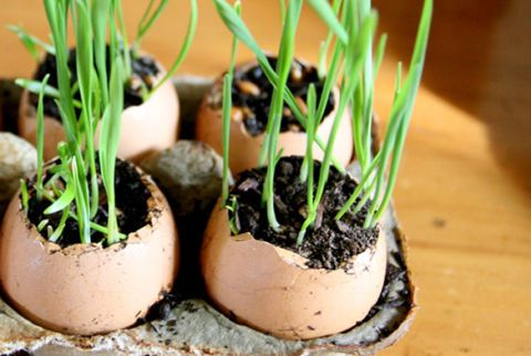 You can decorate with your garbage—yes, you heard us right! Make scrambled eggs for breakfast, then use the discarded egg shells to plant wheatgrass. (It's a great project for kids!) Pin it to your boards! » Get the tutorial at Say Yes