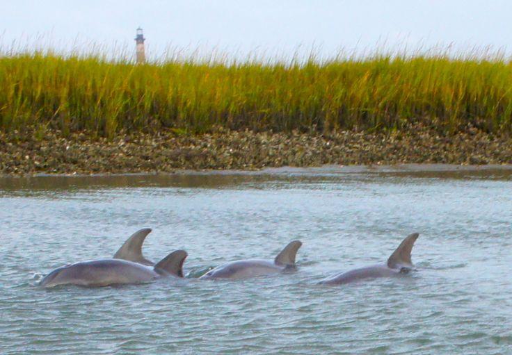 Dolphins at Folly Beach, SC | Kim Wolterman: Folly Beach, South Carolina