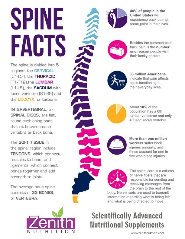 Amazing Facts about Human Spine #Infographics