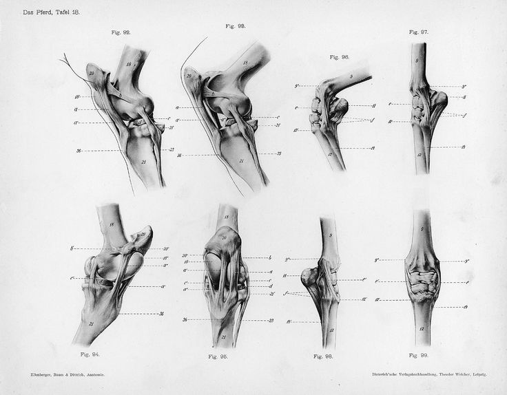 84 Best Equine Anatomy Images On Pinterest Horse Horses And