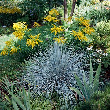 138 best images about fanhomeideas frnt garden on for Ornamental oat grass varieties