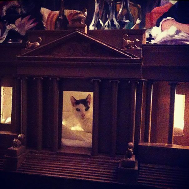 Beemer's New House