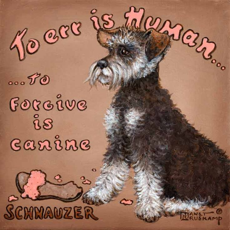 To Forgive is Canine, a whimsical poster style painting of a Schnauzer by artist Janet Kruskamp. A Schnauzer sits in the middle of this square acrylic painting against a light brown background, looking intently to the left. A sandal sits in front of the dog, chewed pieces arount it on the ground. The curved words To Err is Human... across the top are followed by ...To Forgive is Canine centered on the left side of the dog. SCHNAUZER is printed in the lower left corner of this original ...