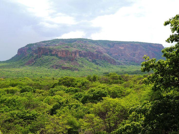 Verde em pleno Sertão - Serra da Capivara em Dezembro - PI