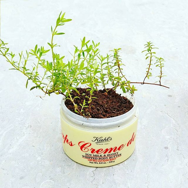 Plante dans un pot de crème diy