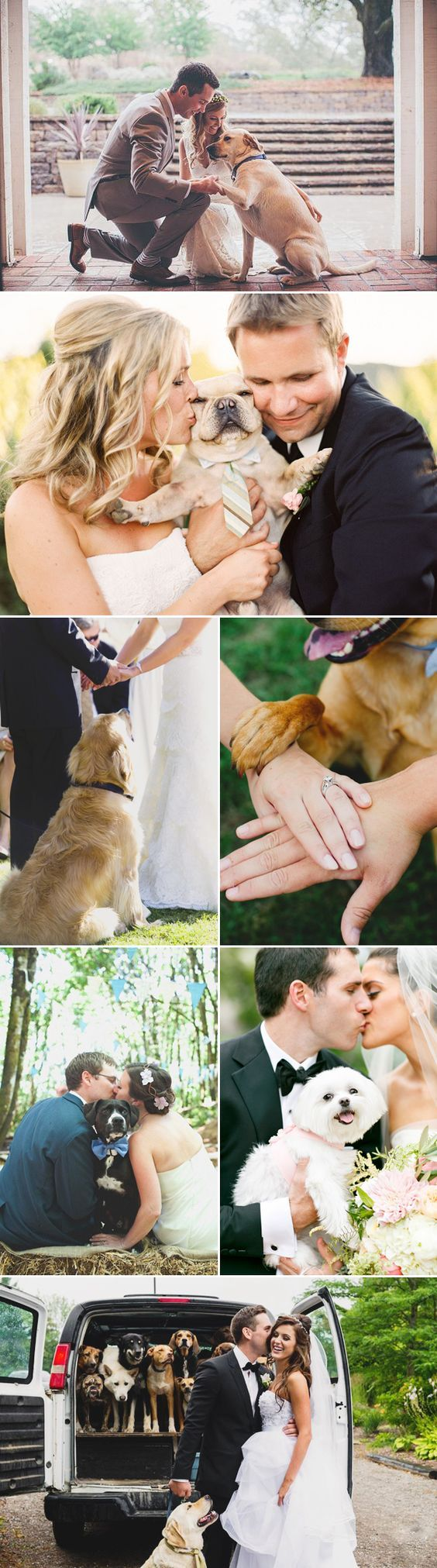 28 Precious Wedding Moments with Dogs and Their Promises!