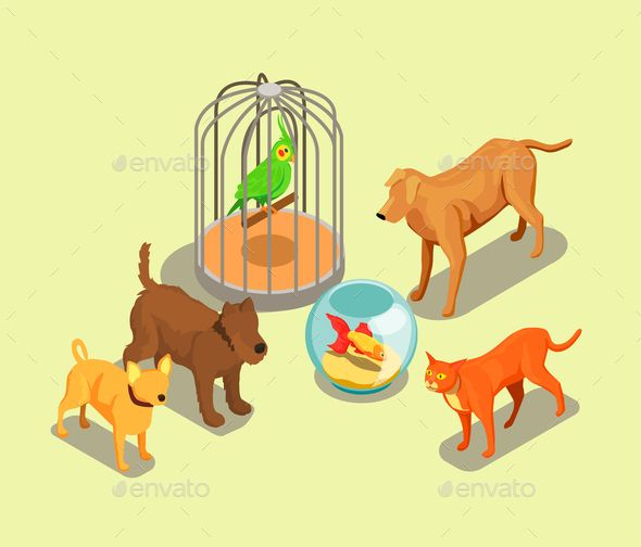 Pet Shop Isometric Background Animal Sketches Pet Shop Isometric