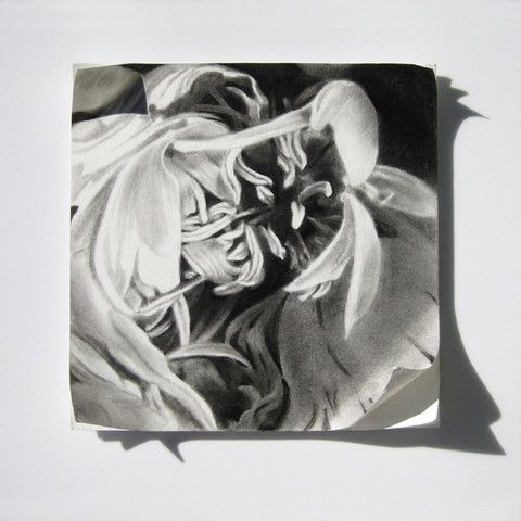 Six Stages III - SOLD by Haywood   PLATFORMstore. Charcoal drawing on mat board