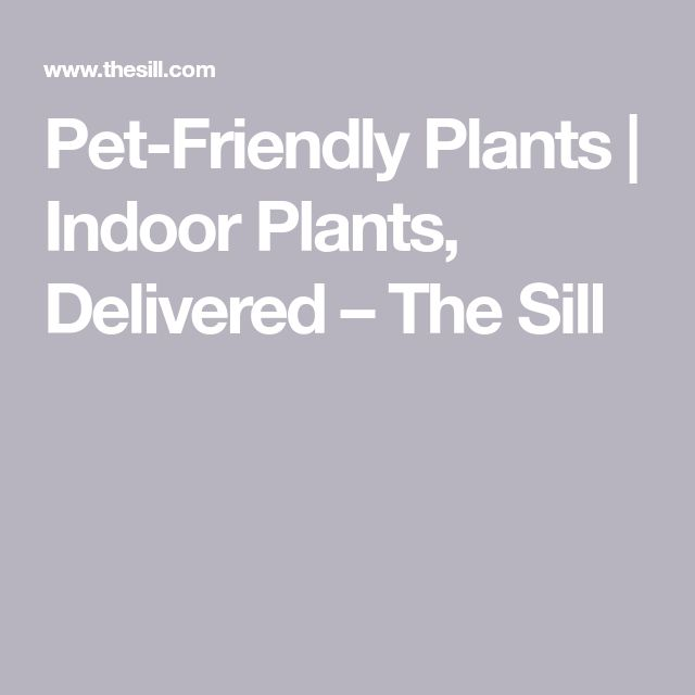 Pet-Friendly Plants   Indoor Plants, Delivered                              – …