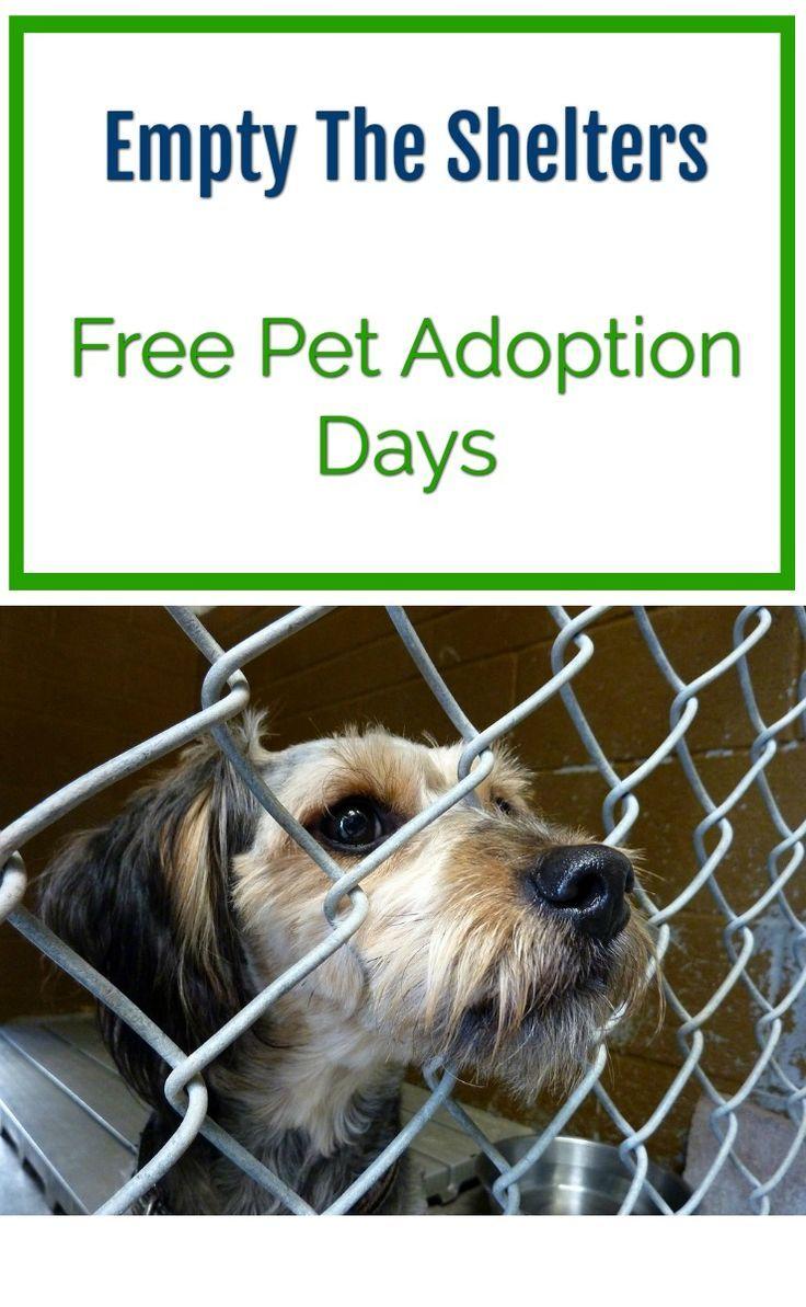 Empty the shelters - free pet adoption days. Cat and dog adoption days.: