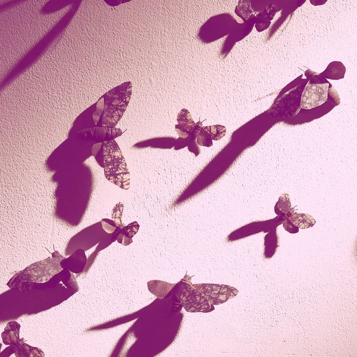 Joana Leito's wall flocked with butterflies, at Wimbledon College of Arts