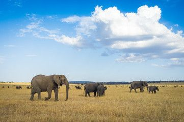 Elephants in the Serengeti National Park, Tanzania, Africa