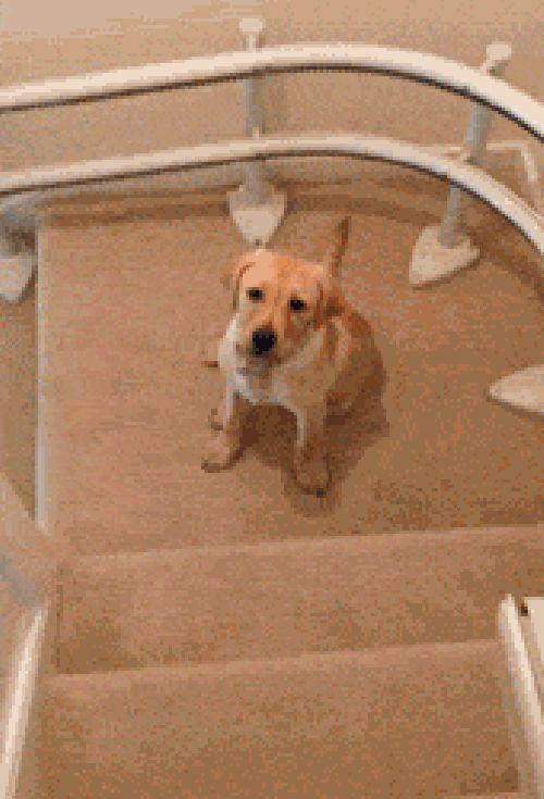 Treppen hinabsteigen (gif)
