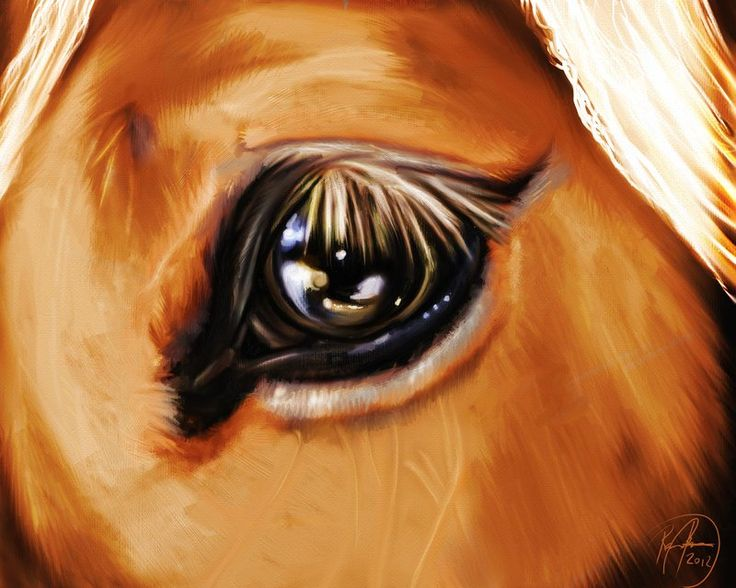 "mu boyfriend just gave him self a quick exercise in reflections and fur this evening! So he made this! The eye in the picture belongs to ""Thor"", he is a great Jutlander we are housing at the moment.. A awesome, and quite huge horse!: Jutland Horses, Things Horses, Huge Horses"