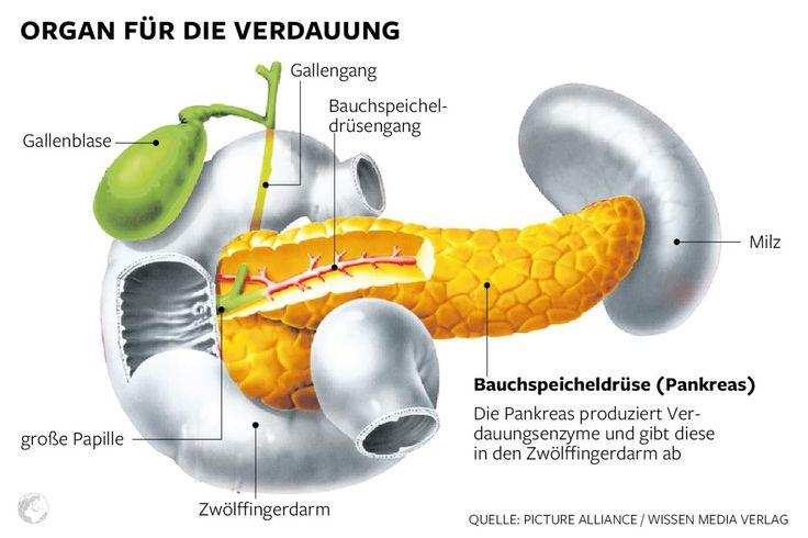 Die Illustration zeigt die Anordnung von Leber, Galle und Bauchspeicheldrüse im menschlichen Körper