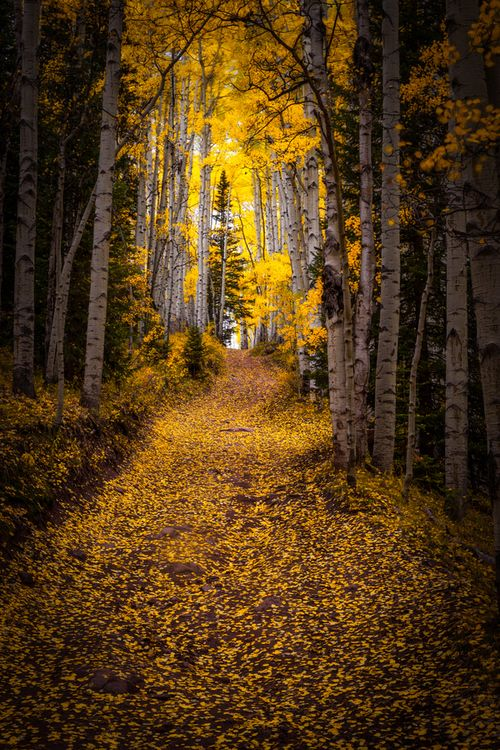 """""""Through the Forest"""""""