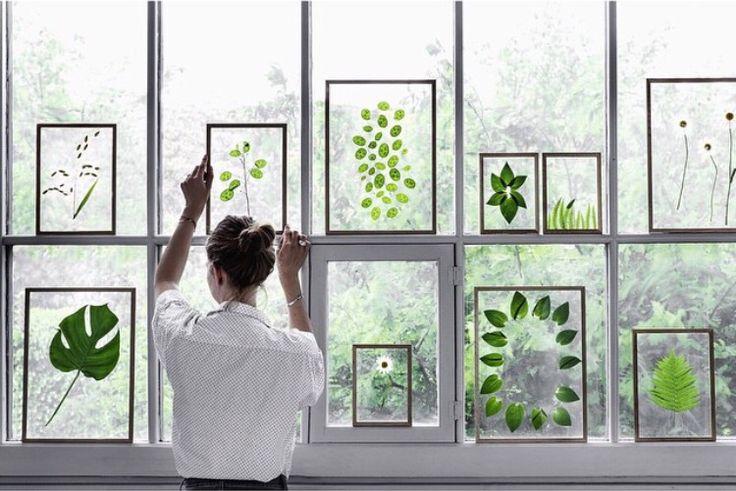 Vegetal frames