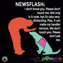Things Service Dog Handlers Want You To Know